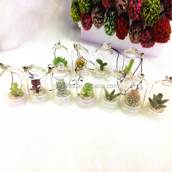OXGIFT Made in China Alibaba wholesale Manufacture Amazon Portable MINI cactus Plants Baby tree Mobile phone garden