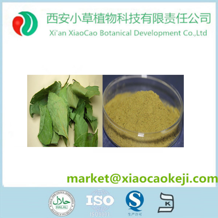 Wholesale Persimmon Leaf Extract 10:1 20:1 Powder