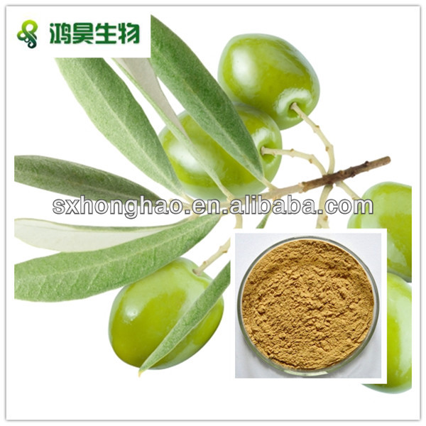 water soluble 20 oleuropein oliver leaf extract