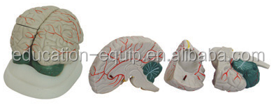 SE323184 New Style Brain Model Brain Model, brain model, plastic model, anatomy model, head model, best selling products