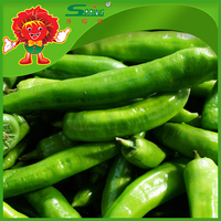 No Polluting Indian Green Chillies Exporter