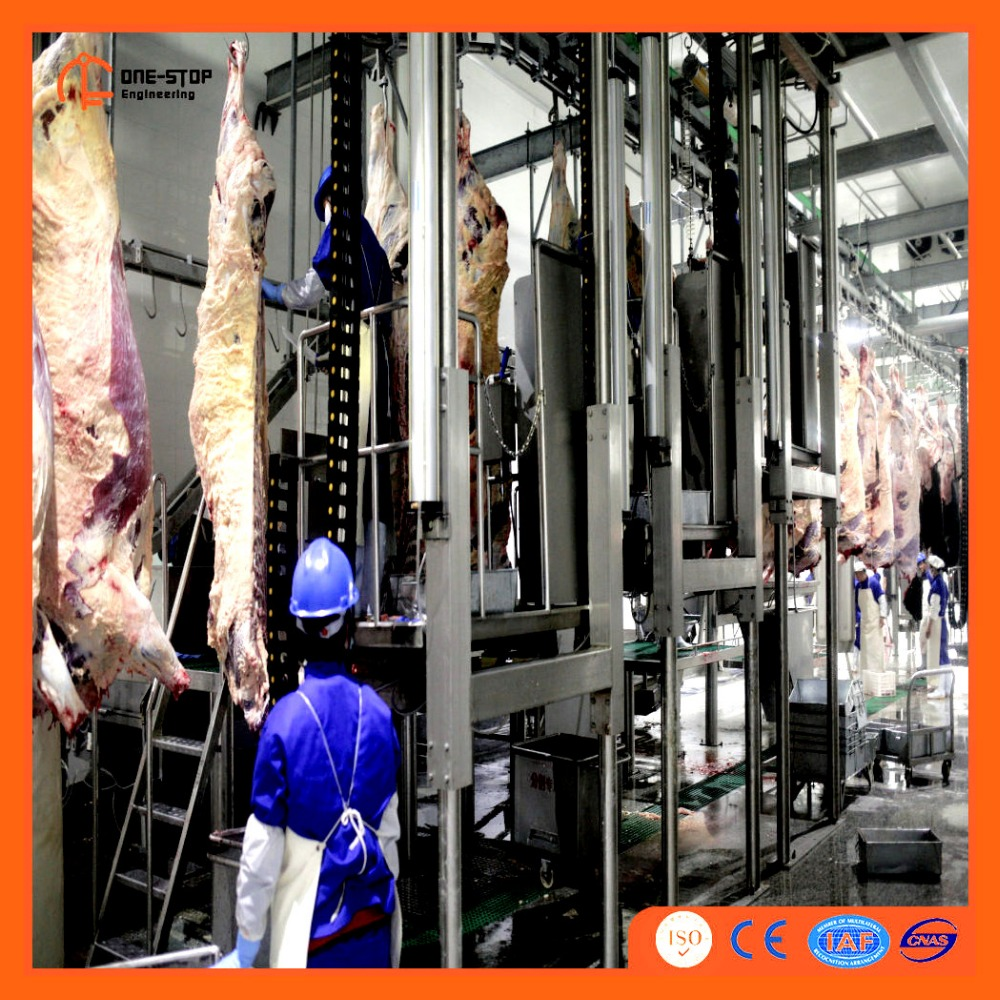 Abattoir Equipment Cattle and Pig Slaughter Line Machine Slaughtering Butchery Production Baby Swines