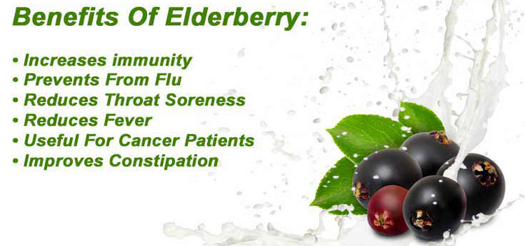Natural Elderberry Extract Powder