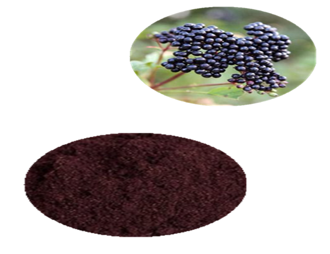 Best Selling Products Of Fresh Maqui Berry Powder Maqui Berry
