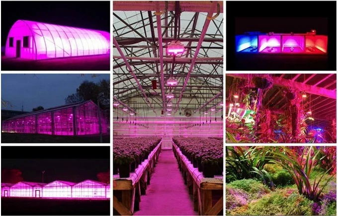 Wholesale modern design Veg&Bloom switch 10W dual chip dimmable full spectrum 600w 1000w 1200w led grow light for indoor plants