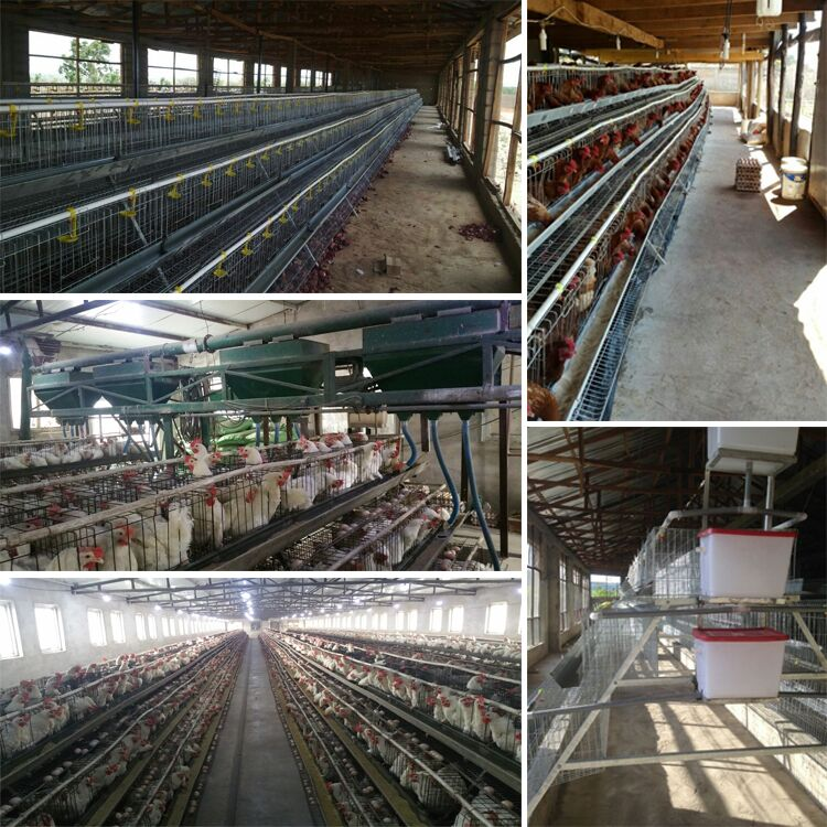 Alibaba China Supplier Broiler Poultry Farm Equipment/uae Chicken ...