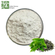 Green Tea Extract,High Quality l theanine Powder,l-theanine 98%