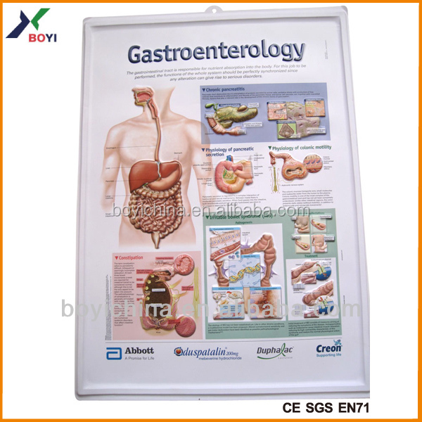 Medical Education Teaching Aid Digestive System Posters - Buy ...