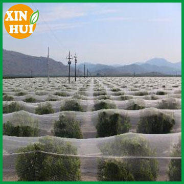 PE Anti Hail Net for Orchard Apple made in changzhou