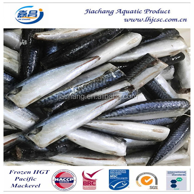 HGT Frozen Fresh Mackerel Pacific Mackerel