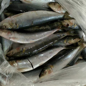 Frozen seafood China supply high quality canned sardine in tomato sauce