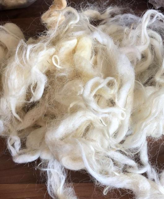Chemical Free Natural Unprocessed Fleece #24-16.4 Micron SUPERFINE and COATED White Merino Fleece Super Soft Raw Wool