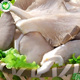 High quality iqf frozen grey fresh dried oyster mushroom 1kg price