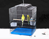 Direct manufacture factory supply folding bird cage parrot cage