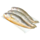 IQF Frozen fresh whole round Yellow Croaker price