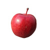 New crop bulk red fuji apple