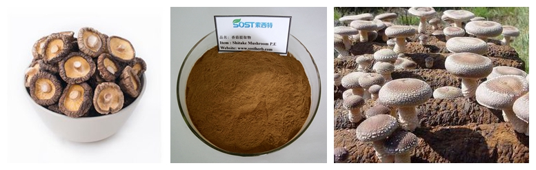 SOST Wholesale Dried Shiitake Mushroom Spawn Extract Powder
