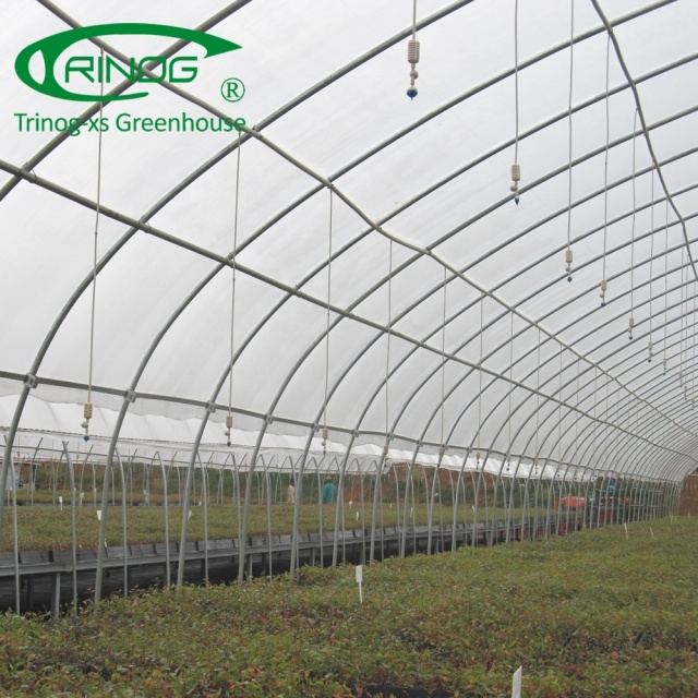 Agriculture used gum tree nursery china greenhouse with plastic film cover