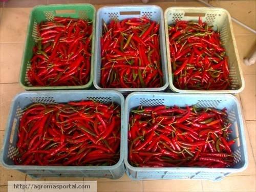 Cili merah kulai buy cili product on alibaba altavistaventures Images