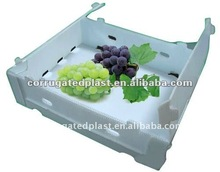 Printing Plastic Fruit Packing Box