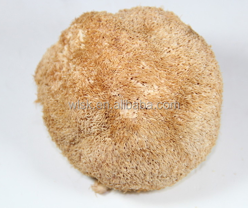 Organic Plant Extract Lions Mane Mushroom Powder For Coffee Herbal Supplements