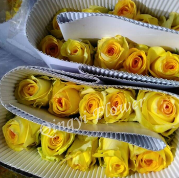 Export Fresh Cut Flowers Roses With Yellow Color Buy Miss Rose