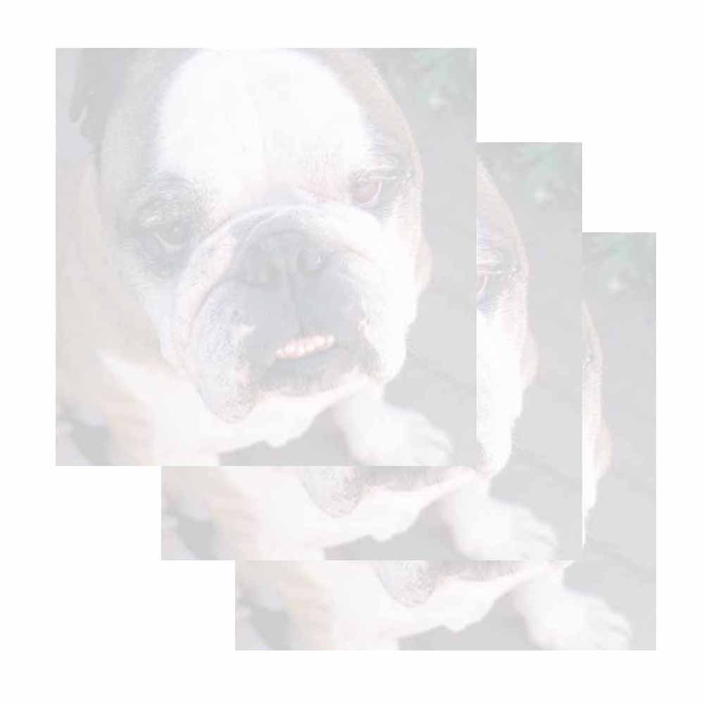 Bulldog Dog Face Sticky Notes - Set of 3 - Animal Breed Theme Design - Stationery Gift - Paper Memo Pad - Office and School Supplies