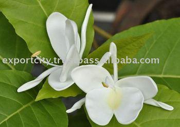 Hawaiian White Ginger Foam Flower Tk Wg2 Buy Foam Flowers