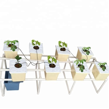 Dutch Bucket Hydroponic System Complete Bato Buckets System For  Planting Tomato