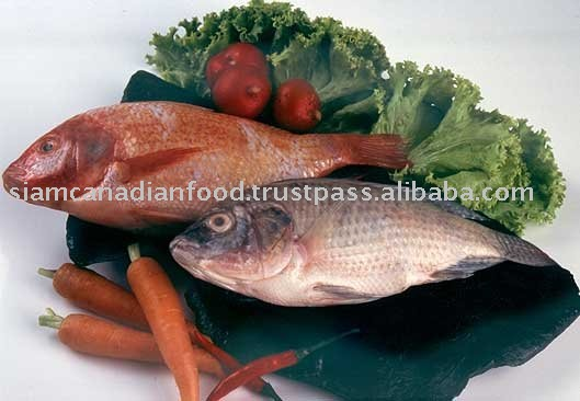 Tilapia [Siam Canadian Group Limited] seafood, fish, shrimp, fillet, squid