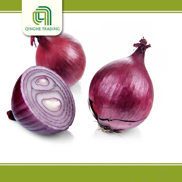 farm red onions packing 50mm size red onion with great price