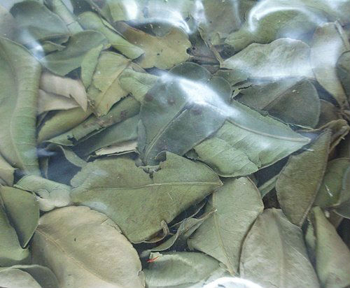 Dried Kaffir Lime Leaves Herbs Spices for Thai Food Recipe, Tom Yum Soup, Curry Wholesale Price Made of Thailand