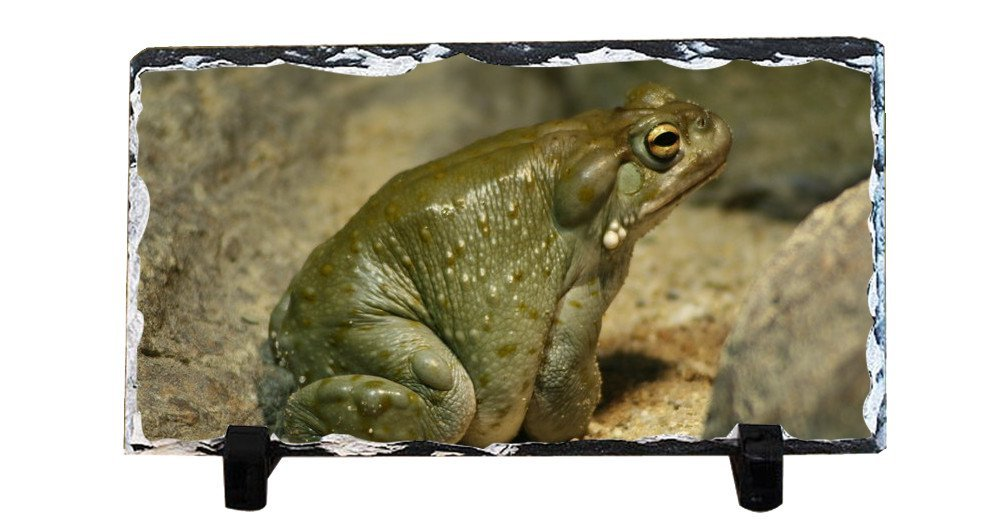 Y.H.X Personalized Picture Frames Photo Rock Slate Frog Photo Plaque Customized Photo Plaque