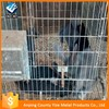 welded rabbit cage (high quality and best price )