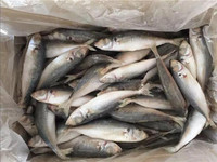 Cheap frozen sea food whole round blue scad fish wholesale.