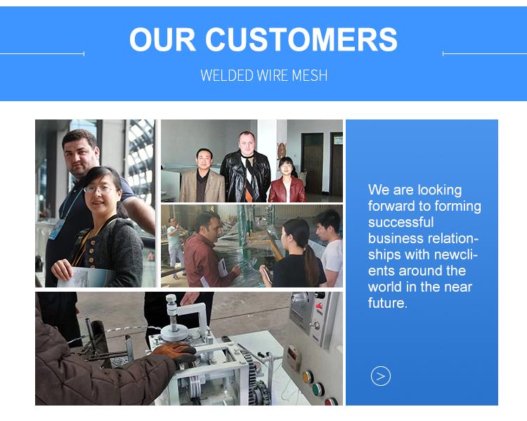 Low price galvanized welded wire mesh/pvc coated welded wire mesh and iron wire mesh