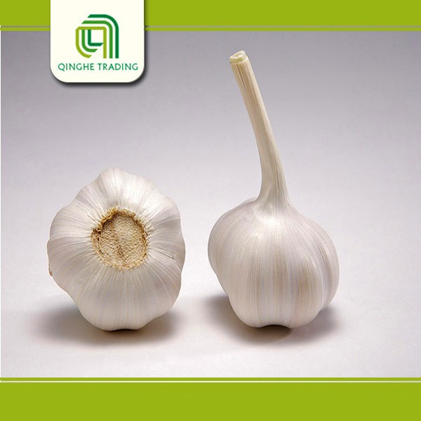 Brand new garlic price in china