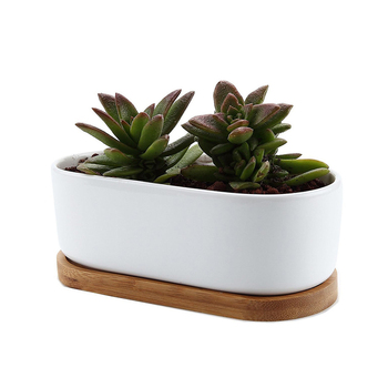 Ceramic White Modern Oval Design Succulent Plant Pot