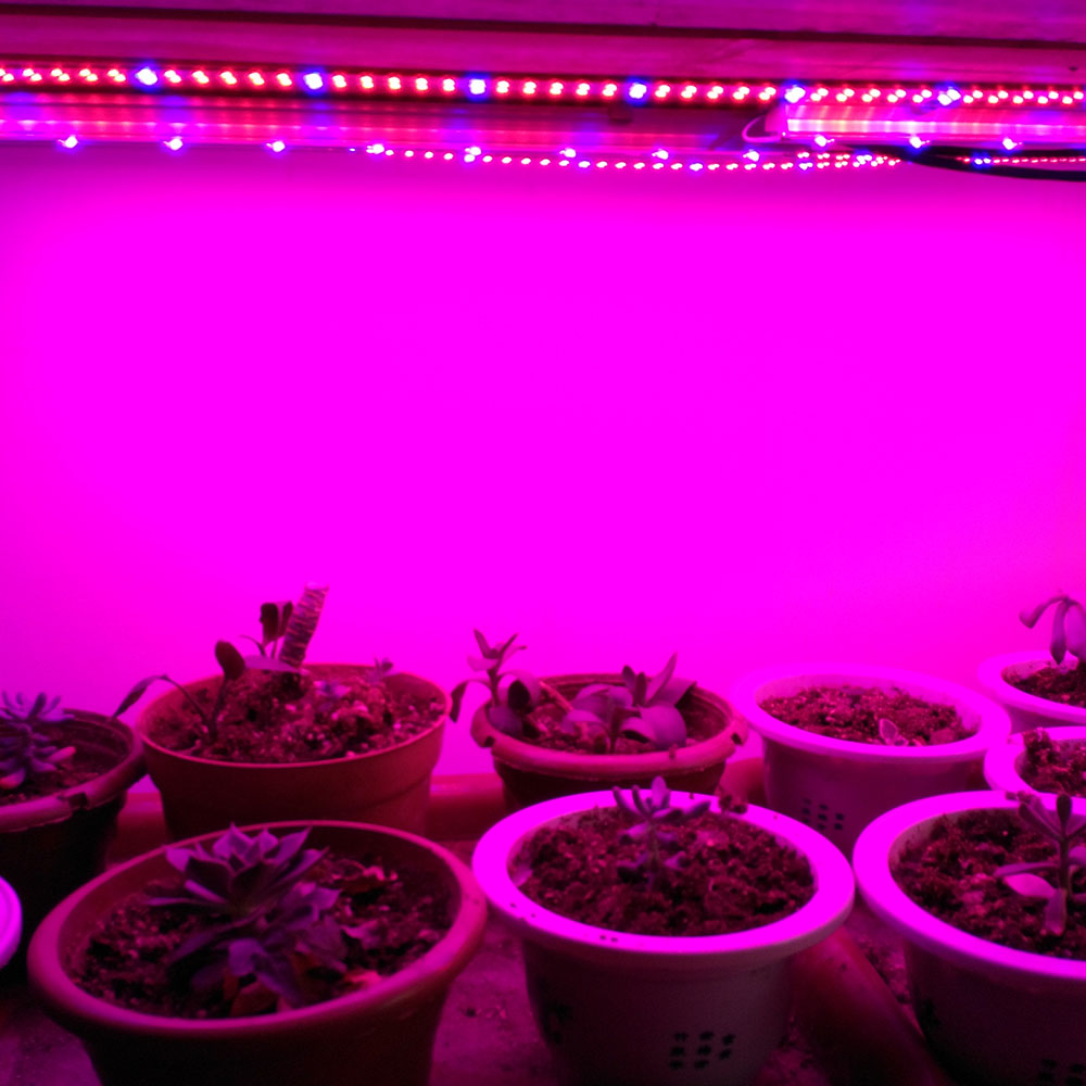 China area 51 led grow lights china area 51 led grow lights china area 51 led grow lights china area 51 led grow lights manufacturers and suppliers on alibaba parisarafo Image collections