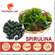 Nutritional Supplements Spirulina Soft Capsules