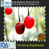 Low Price Plant Extract Climbing Nightshade Extract