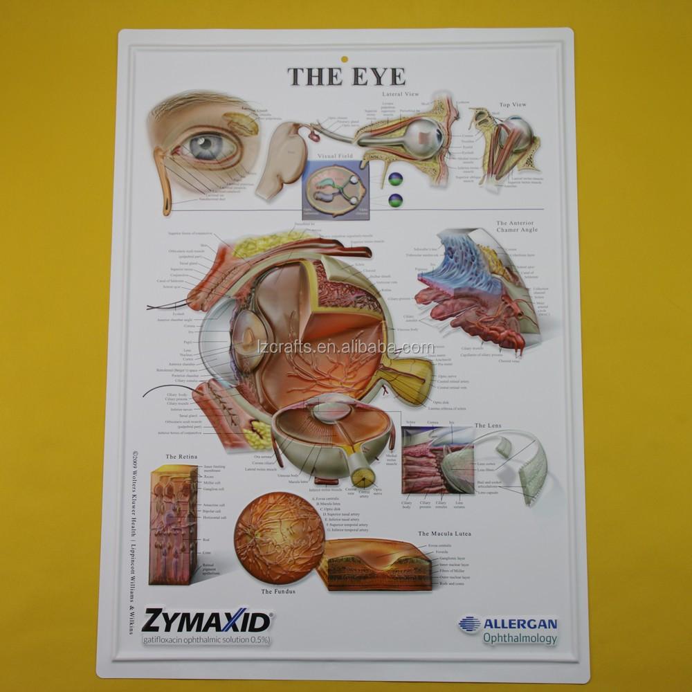 3d Eye Anatomical Chart/3d Medical Posters - Buy Eye Anatomical ...