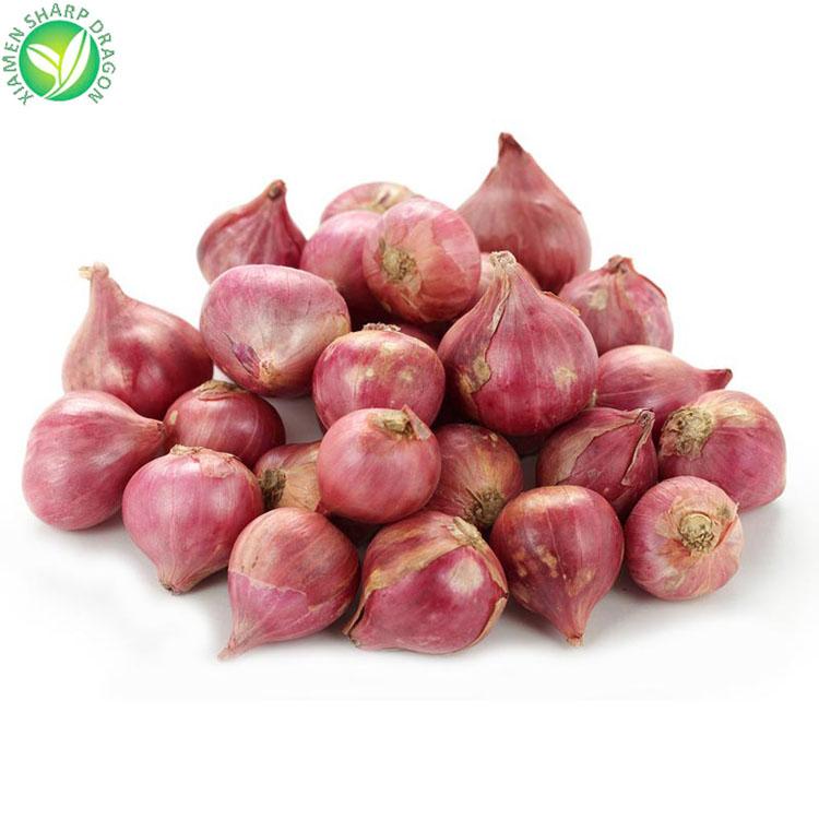 China spring onions wholesale 🇨🇳 - Alibaba