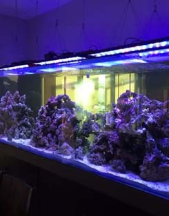60cm/24inch/60w Dimmable Programmable Led Aquarium Light With ...