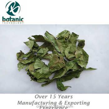 foglie di tè di perdita di peso