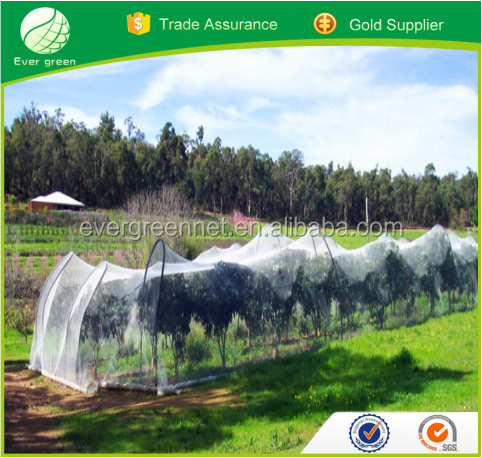 New HDPE Hail Greenhouse Meshes for Protect Fruits and Vegetables