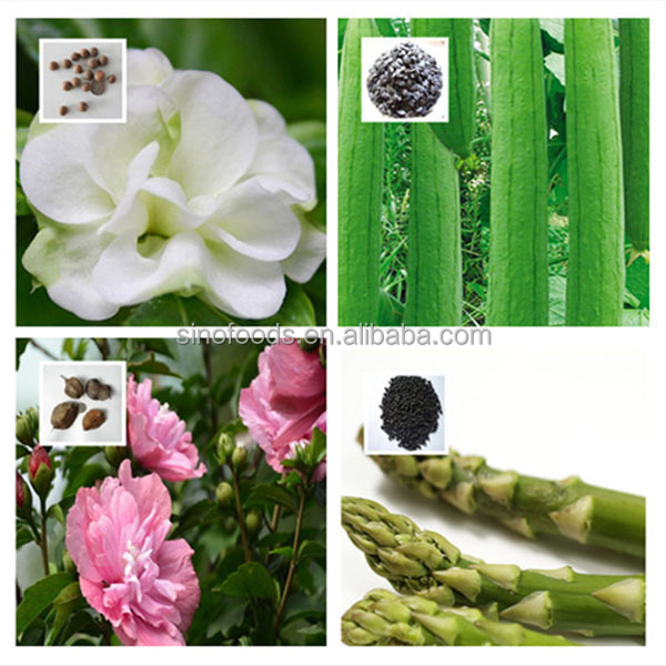 Qing mei zhong zi high yeild green plum seed for planting