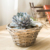 Handwoven grey wood chip basket willow garden pots with linner