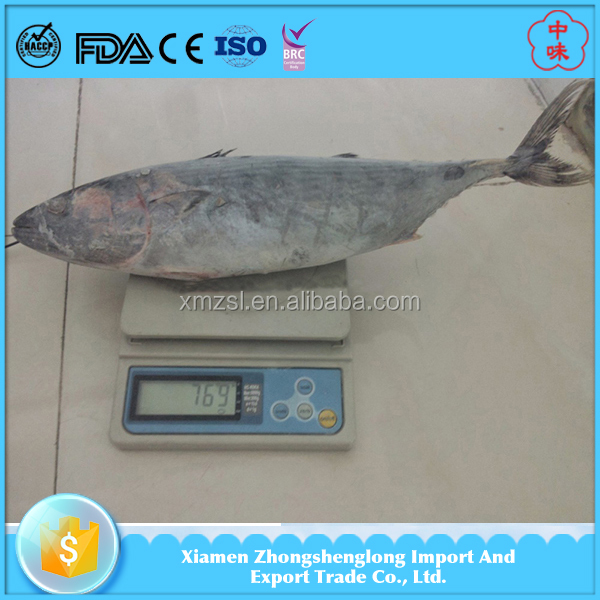 New Landing Frozen Whole Round Bonito Skipjack Tuna from Reputable suppliers.