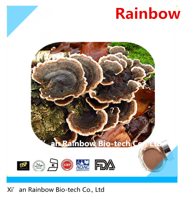 Professional reishi mushroom seed with CE certificate